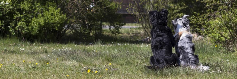 Zwei Hunde halten sich im Arm/in der Pfote - Dogsfellow Hundetraining Uelzen